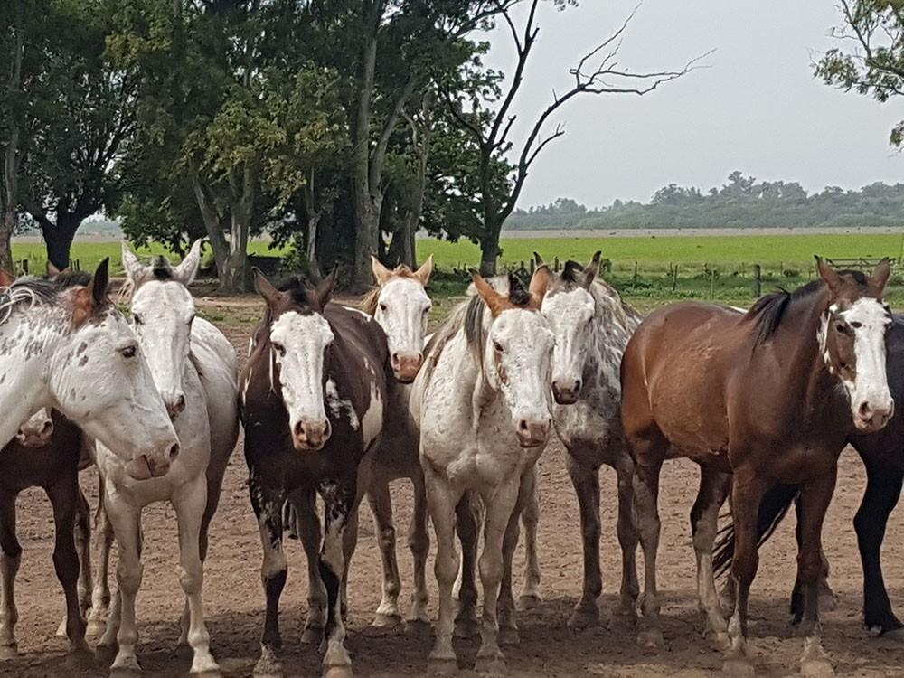 Кони на ранчо