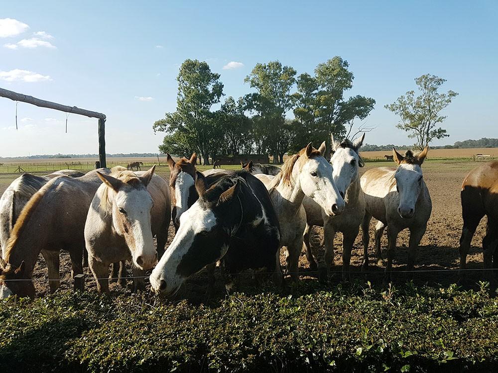 Кони на ранчо Санта Сусана